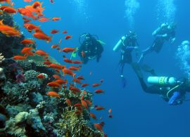 Diving Red Sea Pool Sea Diver Padi Mask Tank Bcd Seafari Boat Ship Tour